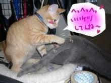 丸猫本舗-セクハラ