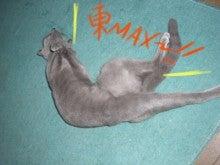 丸猫本舗-東MAX
