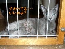 丸猫本舗-さわっても・・・