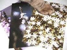 福岡のヒーリングサロン La cachette翌日報-バッチフラワー花カード