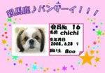 2代目Chichi&Booの部屋