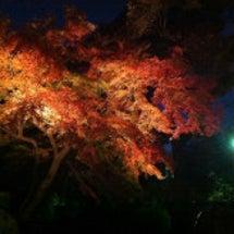 六義園&新宿 ~和な…