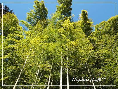 Nagano Life**-中尊寺