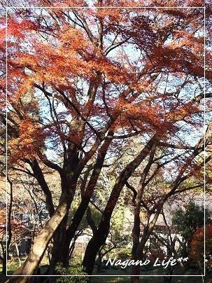 Nagano Life**-中尊寺紅葉