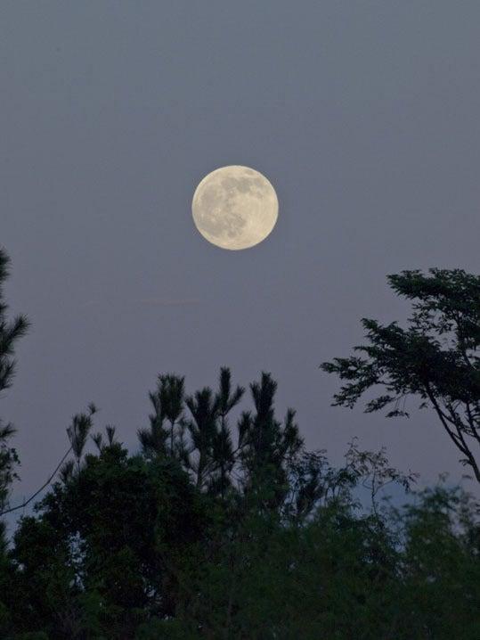 ケロケロの散歩道-満月未満