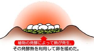 川崎悟司 オフィシャルブログ 古世界の住人 Powered by Ameba-マイアサウラの卵の温め方