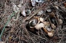 小笠原エコツアー 父島エコツアー         小笠原の旅情報と小笠原の自然を紹介します-エリマキ
