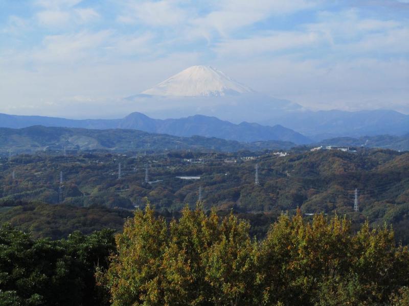 湘南平 富士山 紅葉