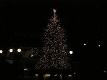 夫婦世界旅行-妻編-クリスマスツリー