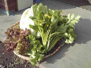 けいとだまのド素人家庭菜園 ただいま冬ごもり中