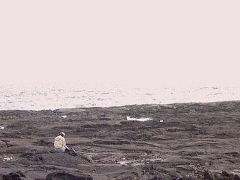 イルカ画像!ハワイ!御蔵、癒しのブログ 【byイルカアルバム】