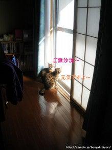 ☆・。~ 日々是猫日和 ~。・☆