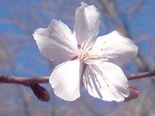 ますどん'S-冬桜