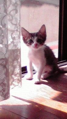 猫にSweets-2010110611100000.jpg
