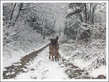 犬と田舎と○○ライフ-20101211