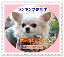 ayu♀&チワワのリキ♂-2010.12.11