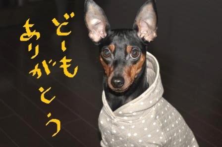 ★ch3★ ミニピンhal&ayaママの超!!お気楽日記