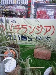 チランジアキングダム-101215_1350~02.jpg