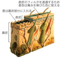 $歪んだものほど美しい-刺青の皮膚 解 剖 図