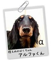 ミニチュアダックス アルファのページ