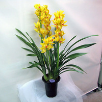 花ギフト館のブログ