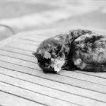 猫ワイナリー