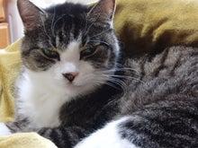日本平でカメラを落としたヴェルサポのblog-うちの猫2