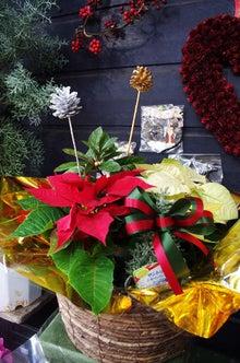 逗子のお花屋さんフラワーショップ花一-クリスマスギフトにいかがですか?