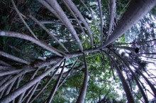 小笠原エコツアー 父島エコツアー         小笠原の旅情報と小笠原の自然を紹介します-タコノキ