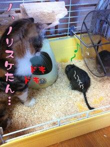 イヌとネコと時々デグー