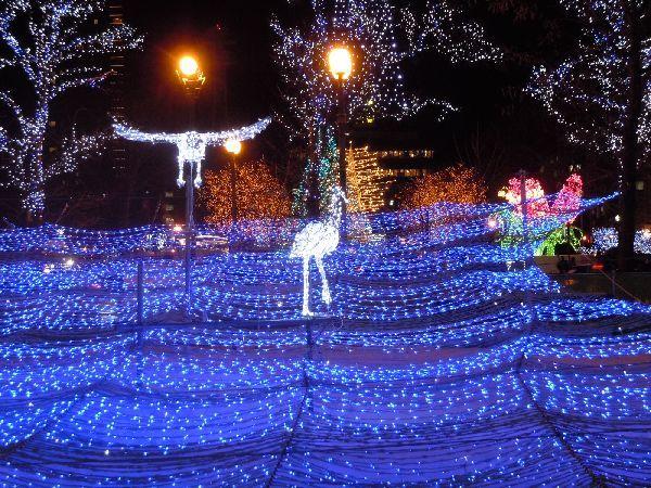 北海道の野生動植物写真-ホワイトイルミネーション