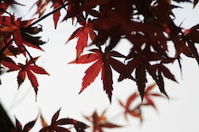 $しろうちゃんの写真館-20101212紅葉