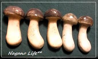 Nagano Life**-きのこの箸置き