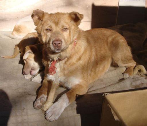 $山梨より犬の多頭崩壊 SOS!-(4)-1222