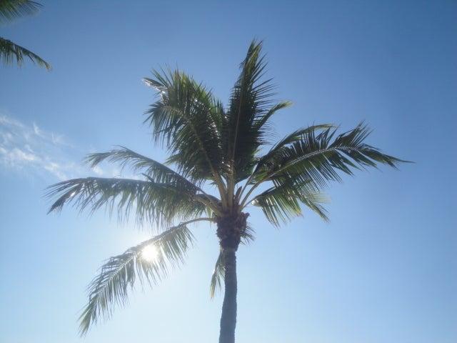 hawaiisurfguideのブログ