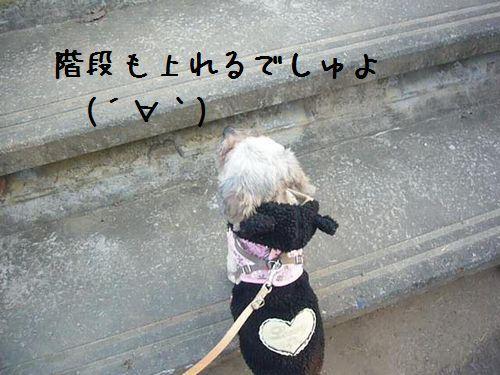 ★未来予想図★ 預かり日記