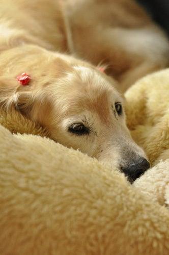 健康と安全を考えるペット屋さんブログ