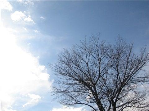 ホンマ独り言やねん…。-京都の冬の空