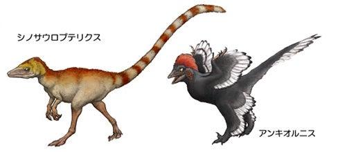 川崎悟司 オフィシャルブログ 古世界の住人 Powered by Ameba-アンキオルニスとシノサウロプテリクス