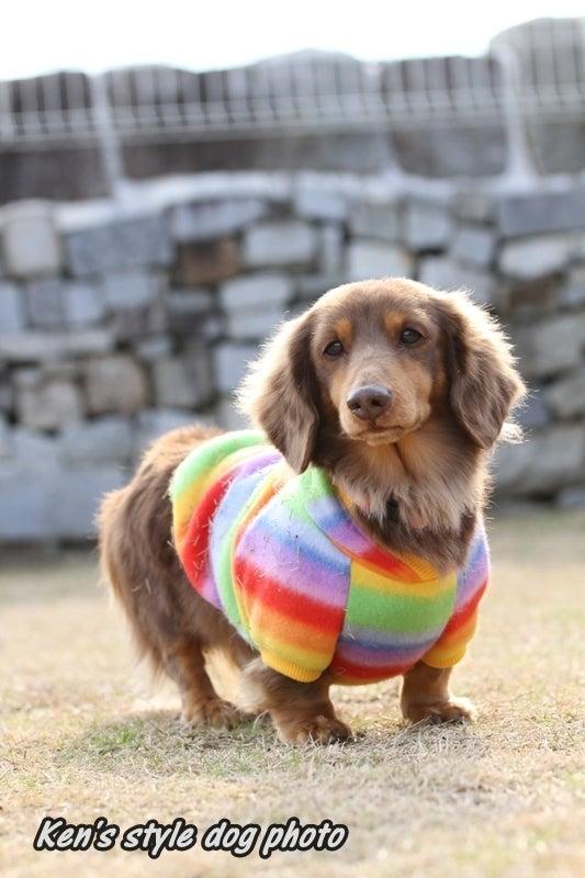 Ken's style dog photo