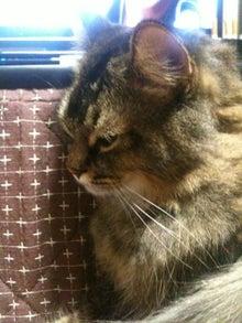 $おやぢと風鈴の猫日記