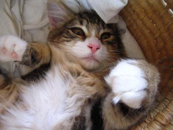 $渡夢太郎家の猫