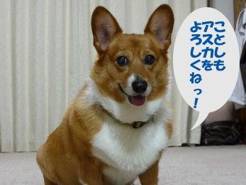 hiyoのブログ