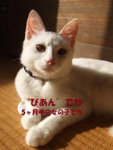 ぱらぱ~の代筆帳-01