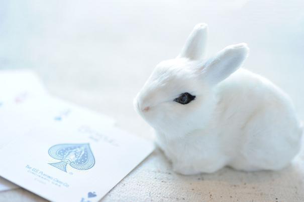 神泉で働くマジシャンのblog-Rabbit