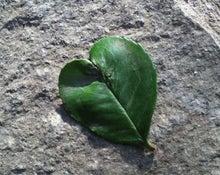 ときたま日記-heart leaf