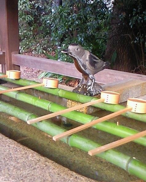 ようこそ!とりみカフェ!!~鳥の写真や鳥カフェでの出来事~-水場もカラスくんです