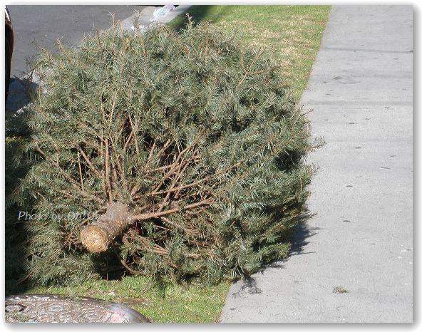 転んでも、タダのオバサン-tree