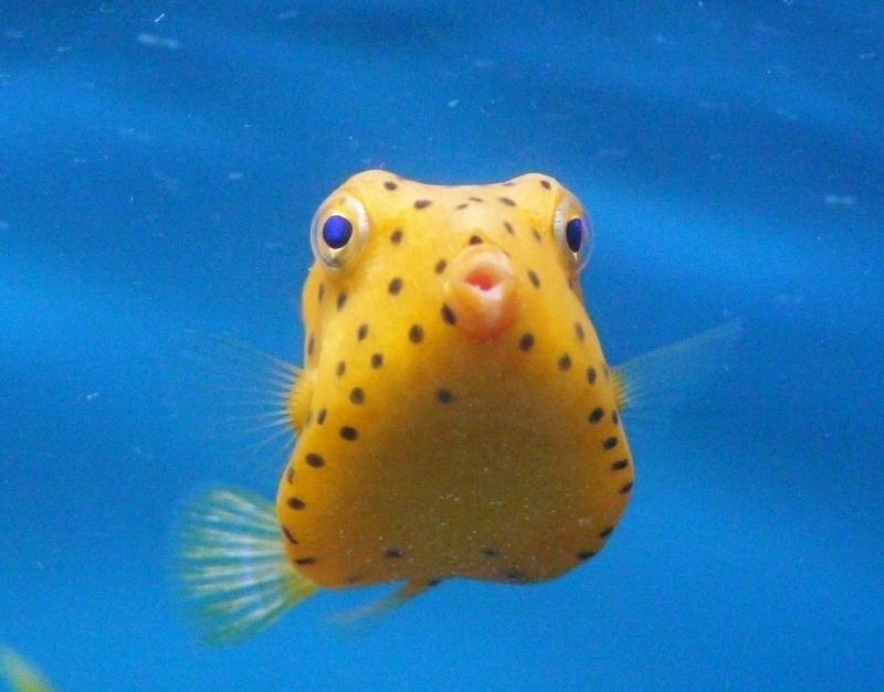 どこでもいきます!~日本全国の水族館~ 水族館ブログ