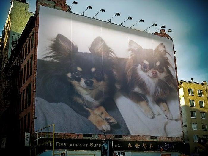 ~my angel~ 犬・猫・ウサギの仲良し日記